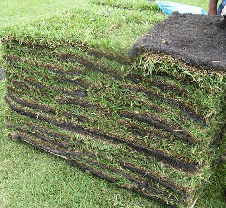 Sod Gr Pallets At Madison Gardens