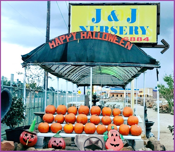 Pumpkins for carving and fall decorations. Available at J&J Nursery and Madison Gardens Nursery, Spring, TX.