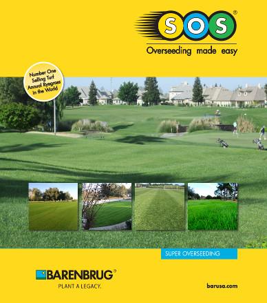 Rye Grass Seeds at J&J Nursery and Madison Gardens Nursery. Barenbrug SOS 400.