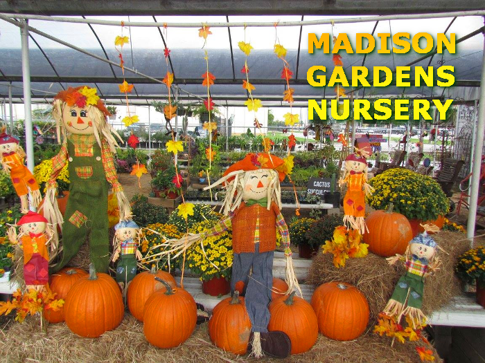 Pumpkins and hay bales for sale at Madison Gardens Nursery, Spring, TX.