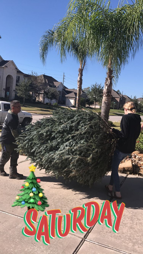 Delivering a Christmas Tree.