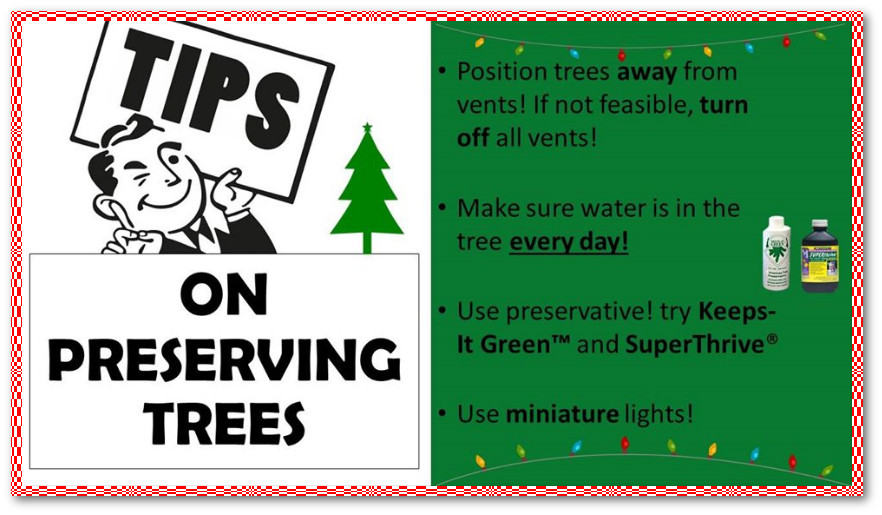 Tips on preserving Christmas Trees.
