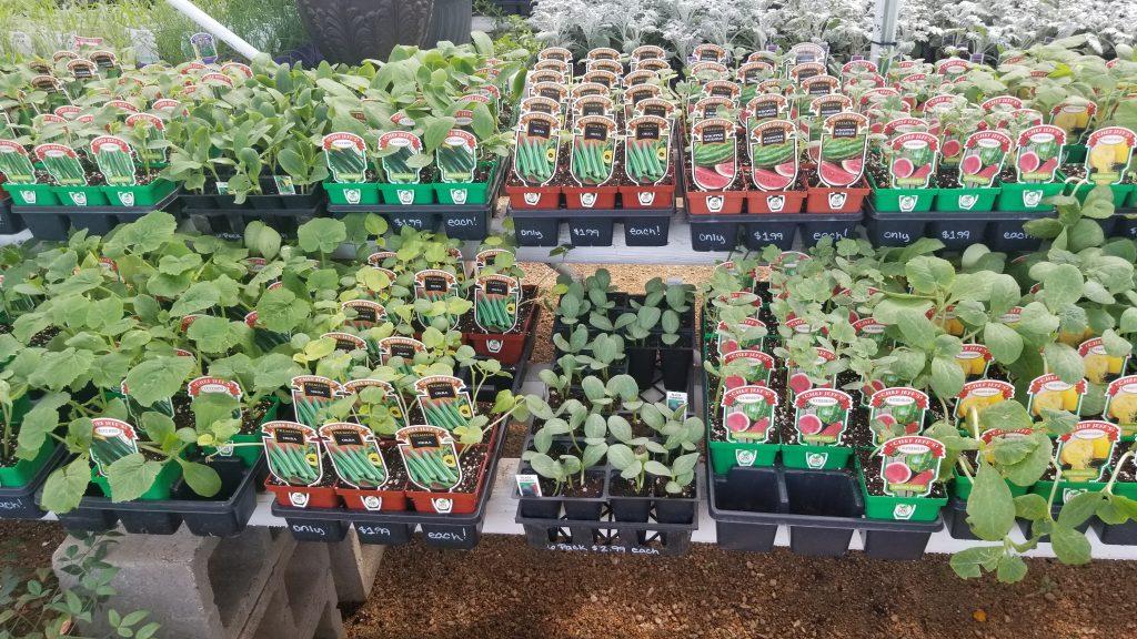 Vegetables for your garden!