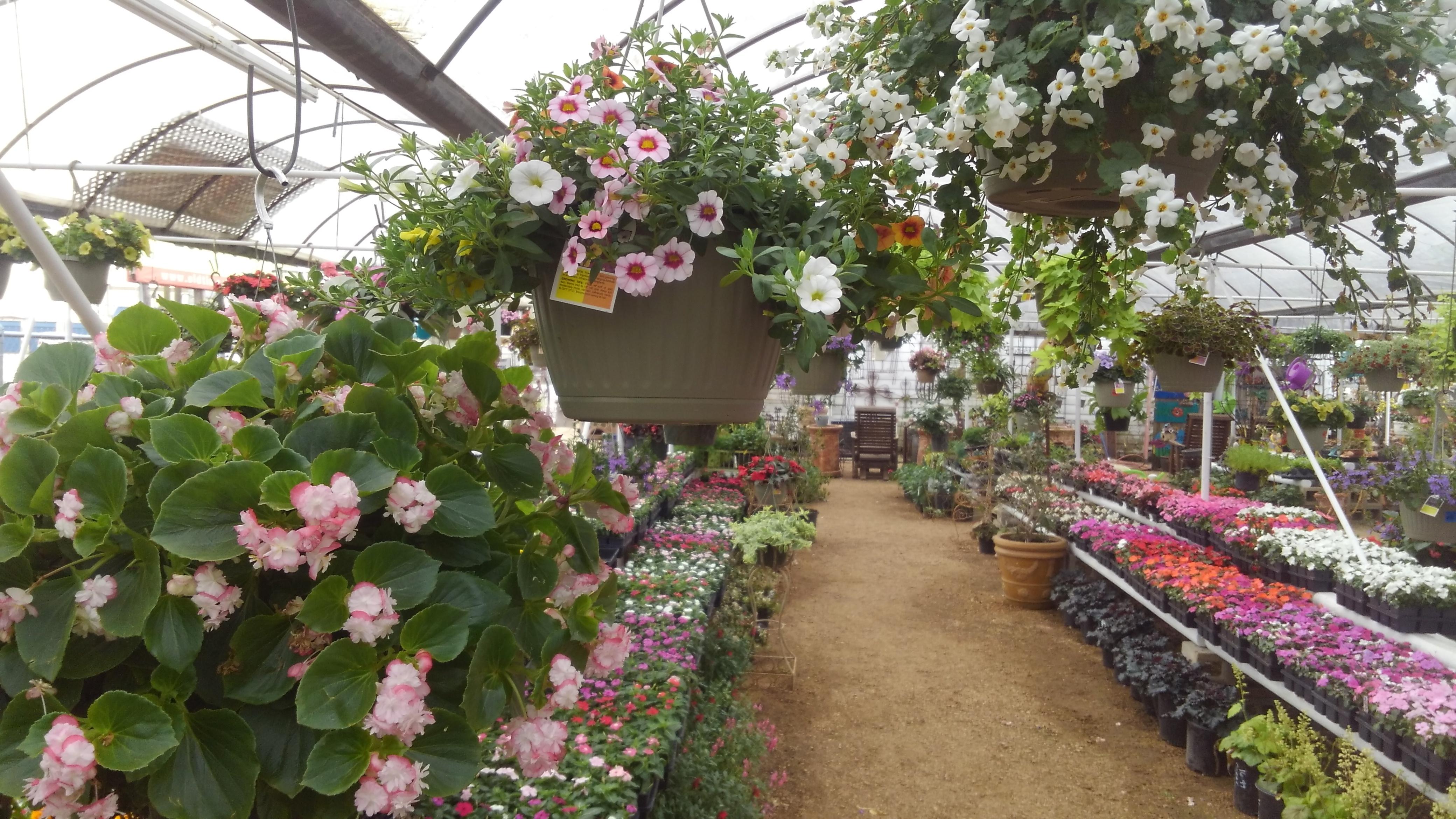 New Plants Flowers Shrubs At Madison Gardens Nursery Spring Tx