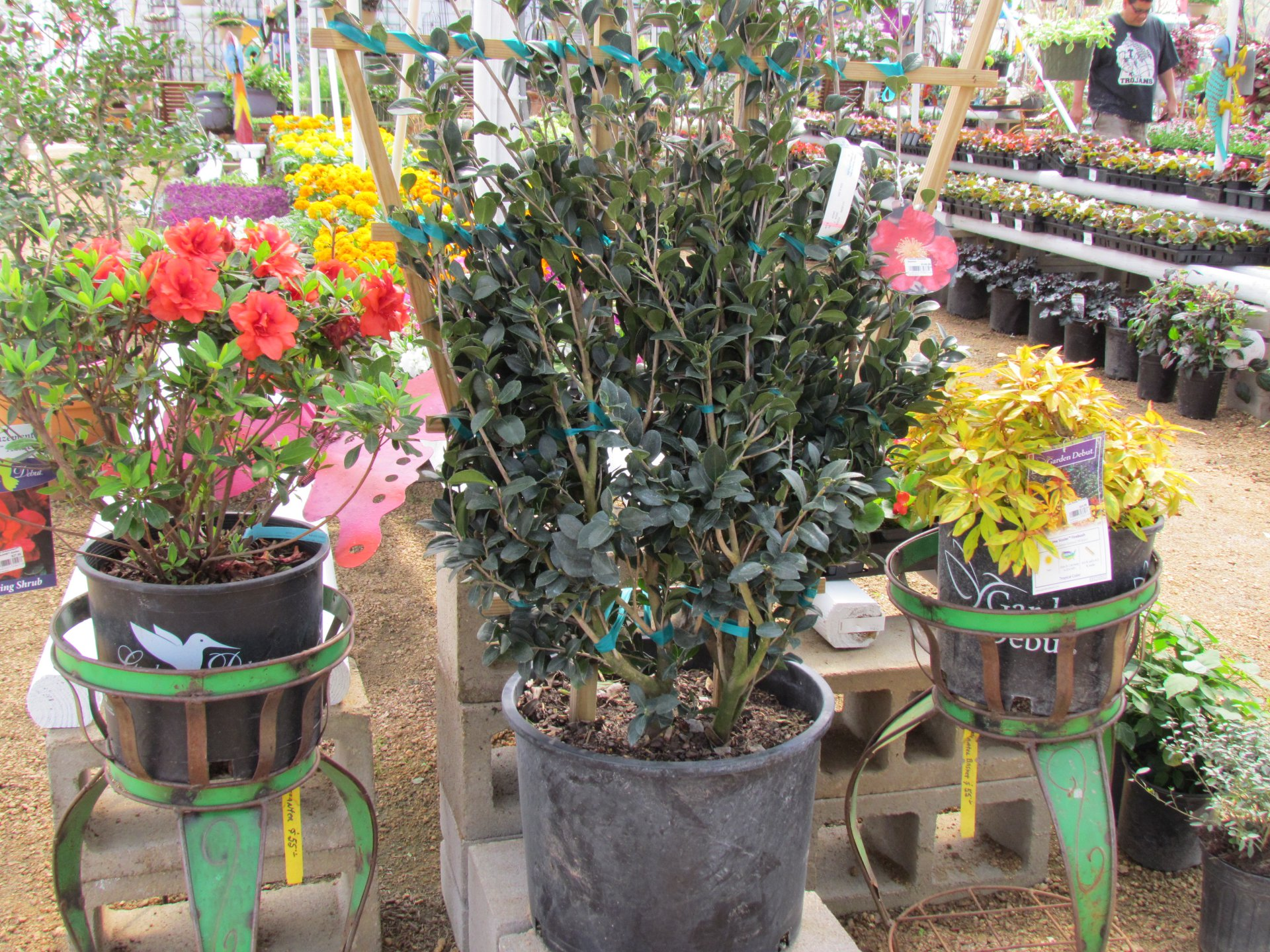 New Colorful Flats Of Flowers Bushes Vegetables And More At Jjs