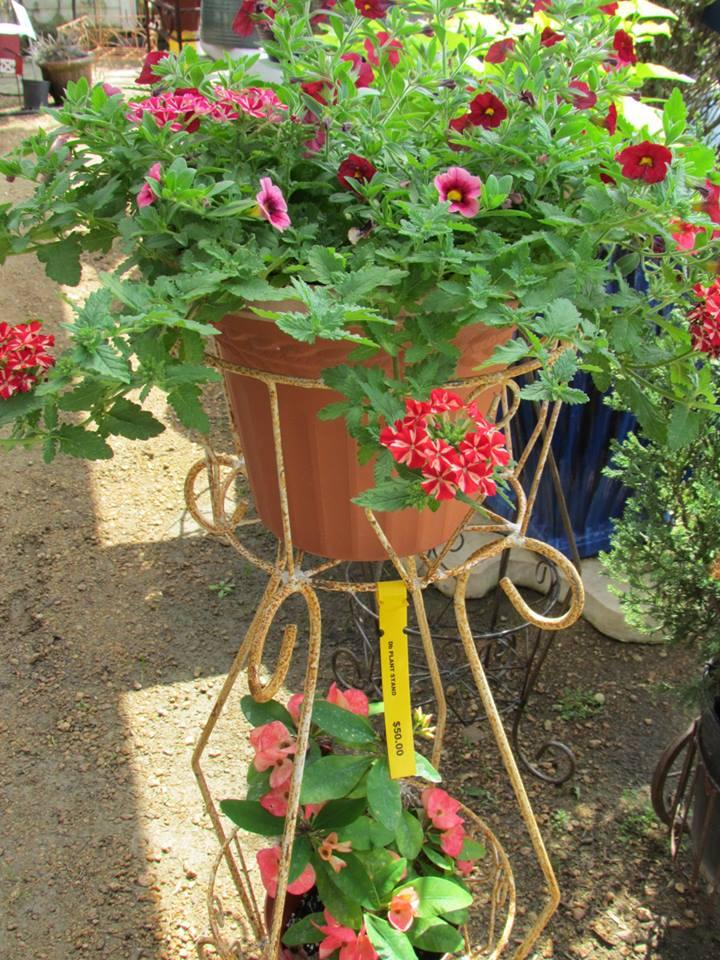 petunia-baskets