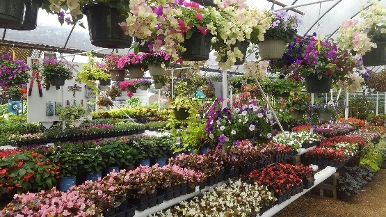 Hanging baskets and flats of flowers!