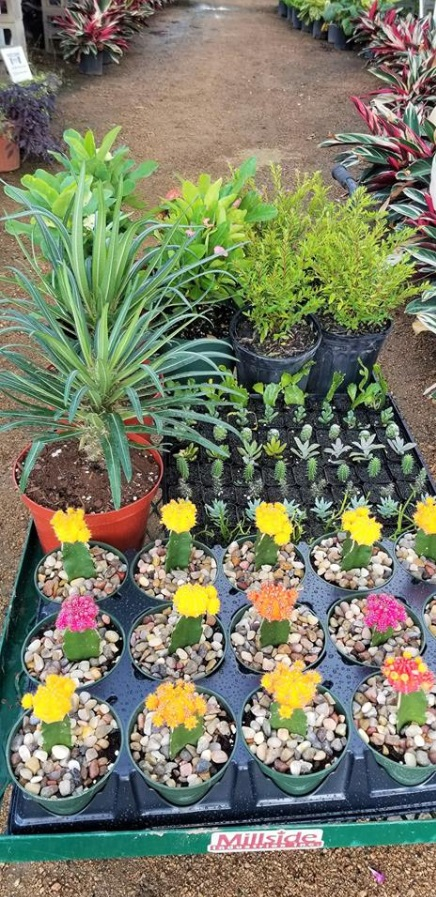 Colorful cactus and baby succulents ready to plant!