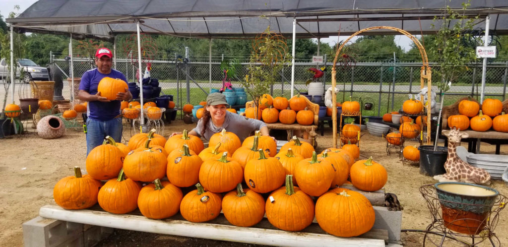 Boo-tiful pumpkins for sale at J&J Nursery!