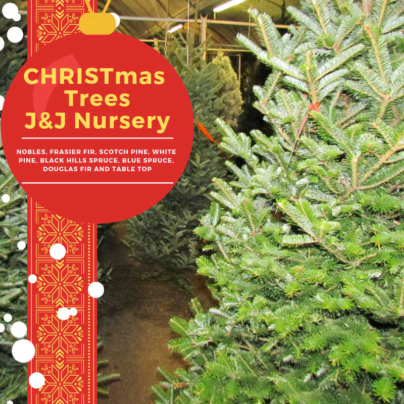 Christmas Trees at J&J Nursery!