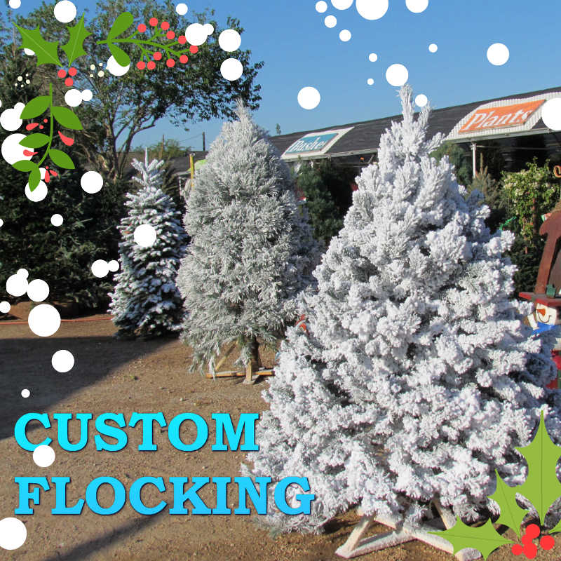 Pick your tree and get it flocked!