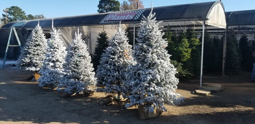 Sleigh bells are ringing for these flocked Christmas trees!!