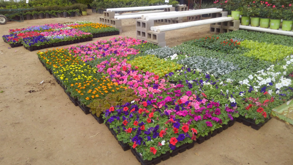 New flats of flowers at J&J Nursery!