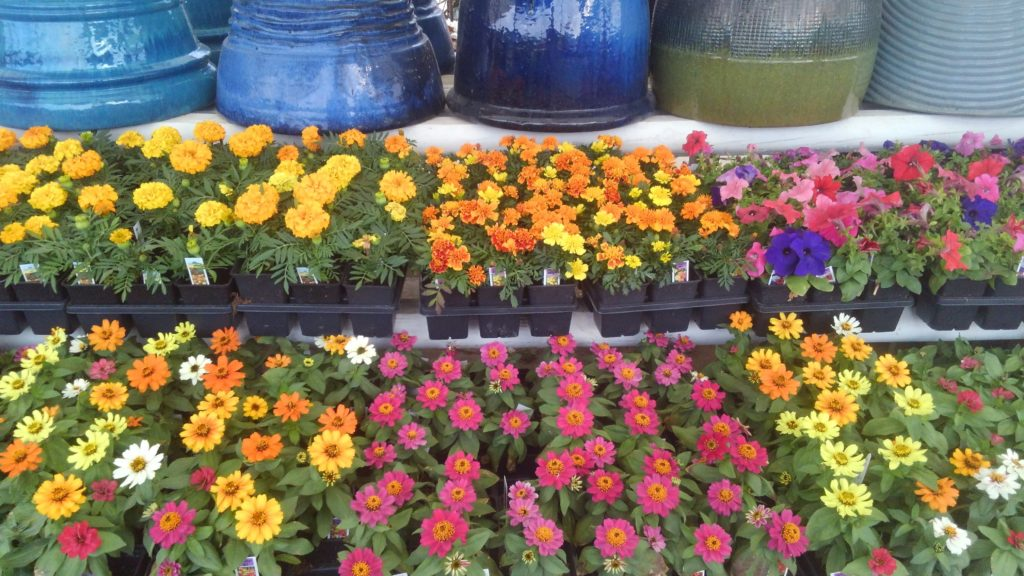 Flats of flowers including happy and cheerful marigolds!