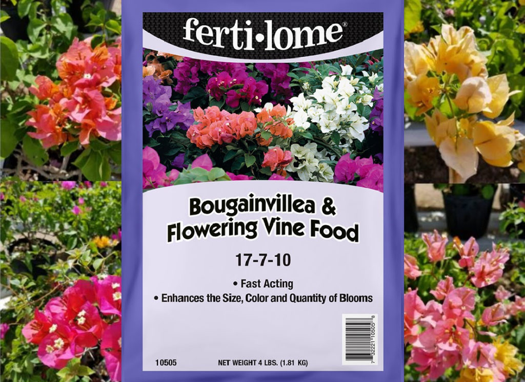 fertilome-bougainvillea-and-flowring-vine