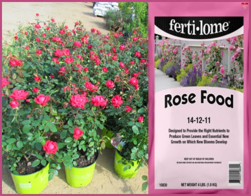 Feed your roses with Ferti-lome's Rose Food!