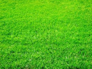 Bright, green summer grass!