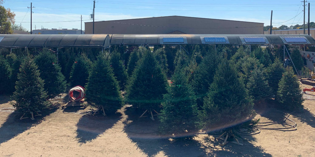 Real Christmas Trees at J&J Nursery!