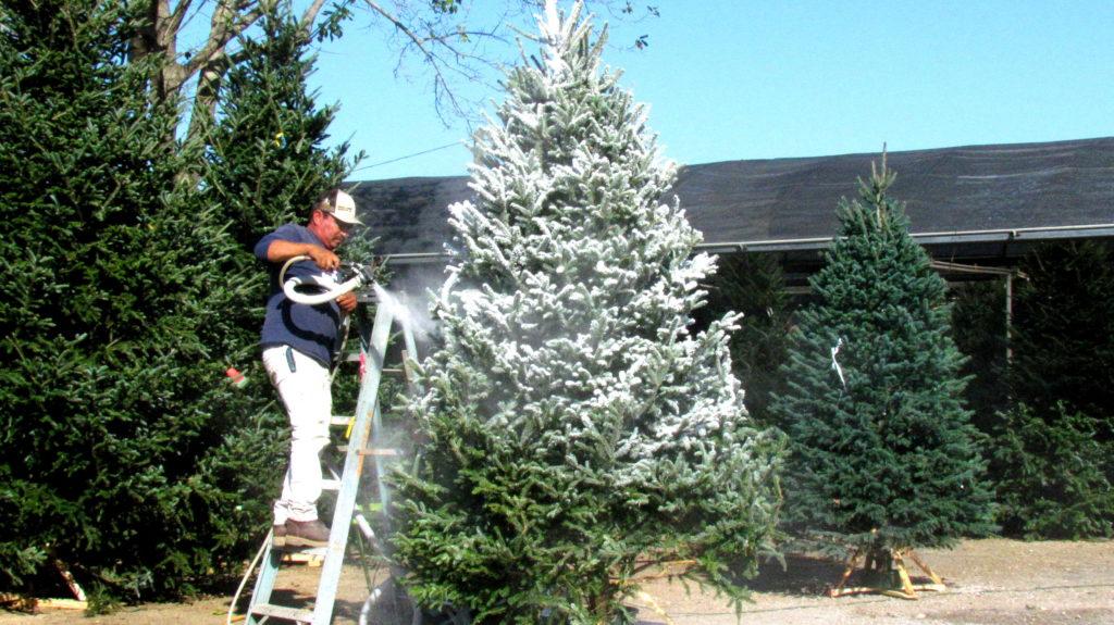 Flocking a Christmas tree!