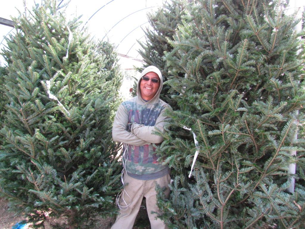 Christmas Trees at J&J Nursery!