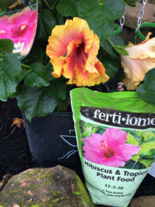 Hibiscus and Tropical Plant Food by Fertilome.