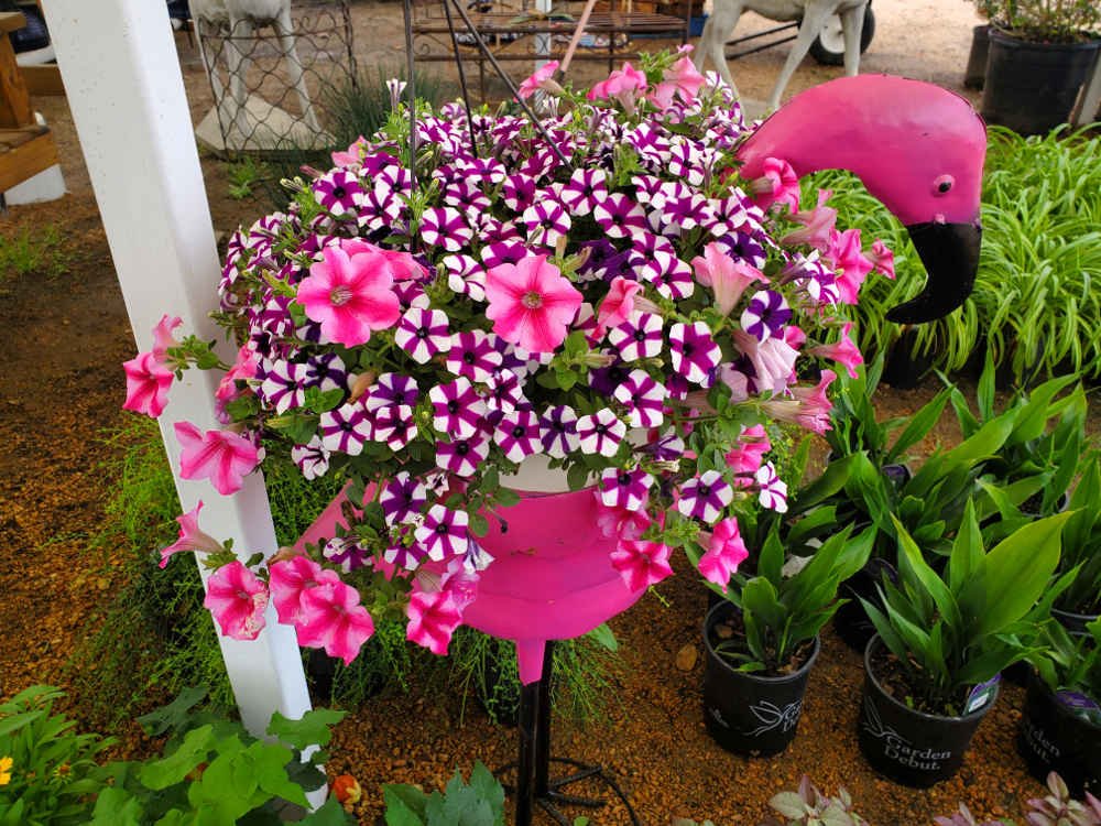 Petunia Hanging Baskets!