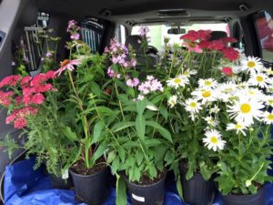 Curb side pick up! Plants, fertilizer, pots, bagged mulches and soils!