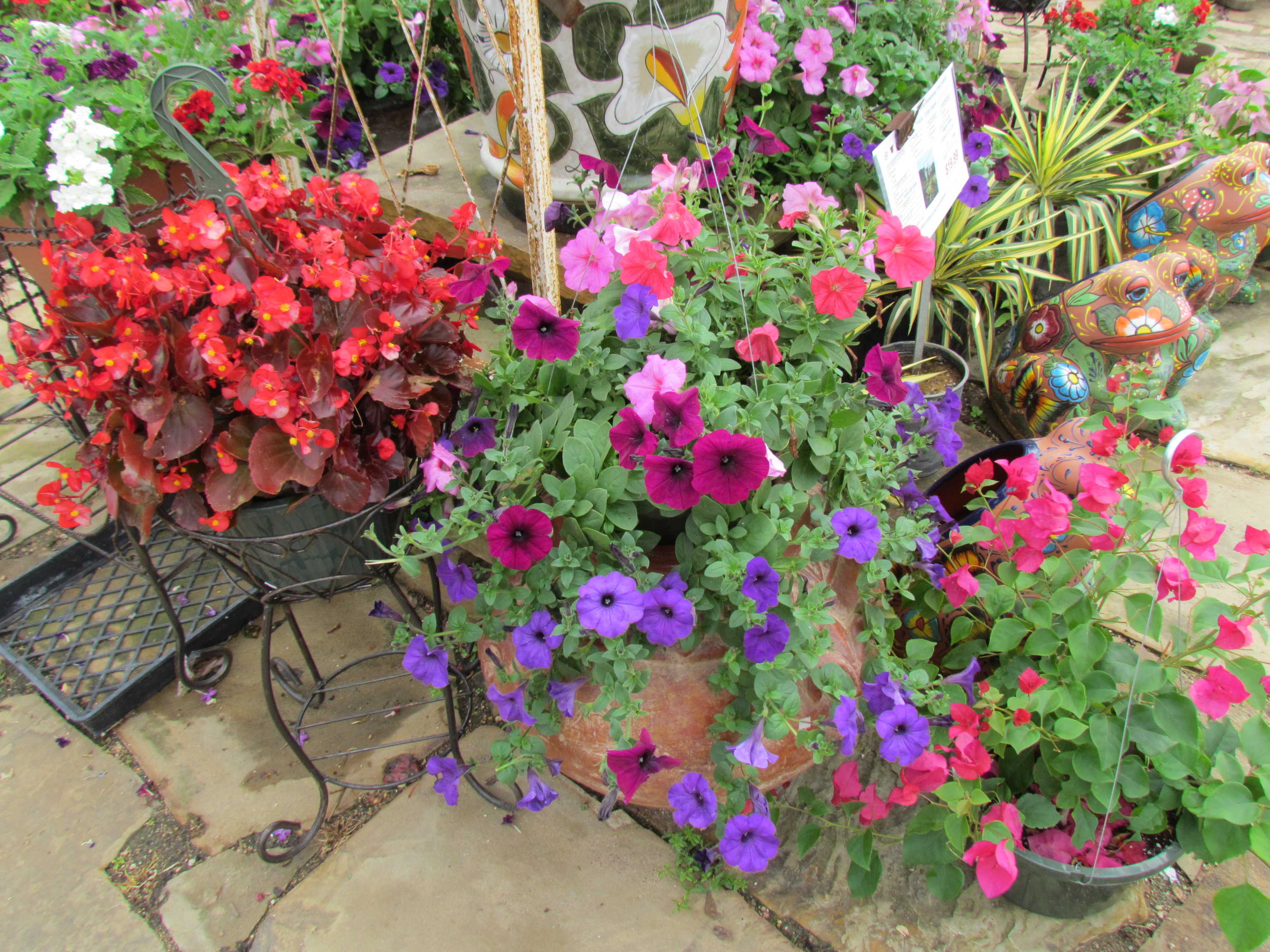 Hanging baskets of begonias, petunias, lantana and more at J&J Nursery, Spring, TX
