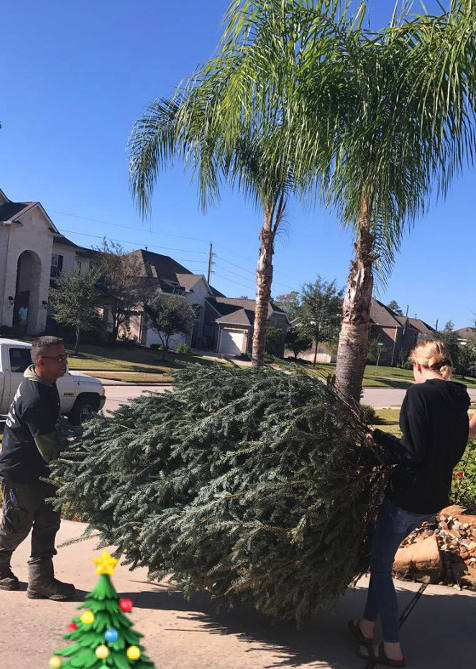 Christmas Tree Delivery From J&J Nursery, Spring, TX
