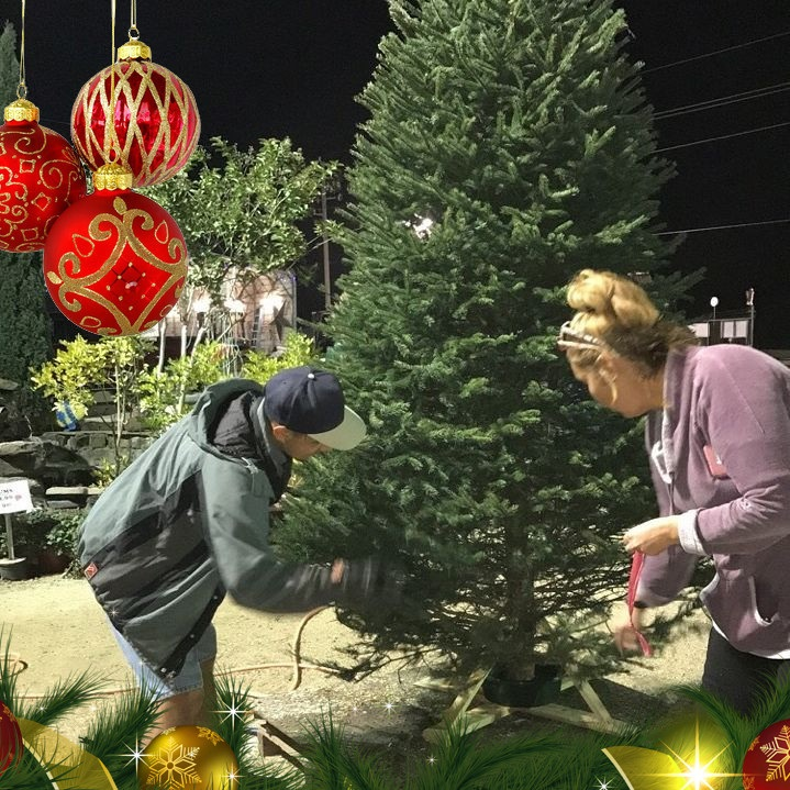 Putting a stand on a Christmas Tree at J&J Nursery, Spring, TX